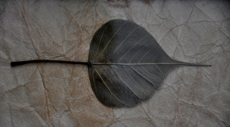 листик с дерева Бодхи