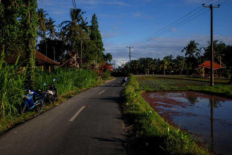природа на острове Бали