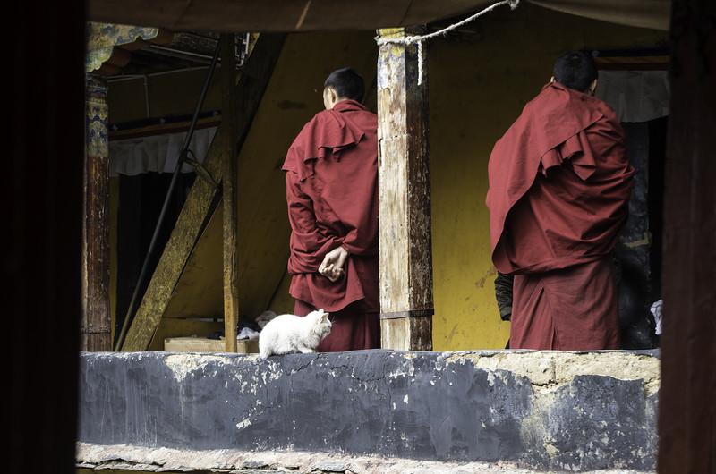 Монахи и кот в Лхасе