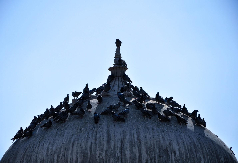 Голуби на крыше