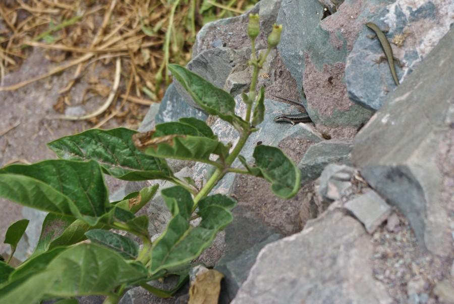 Ящерицы на камне