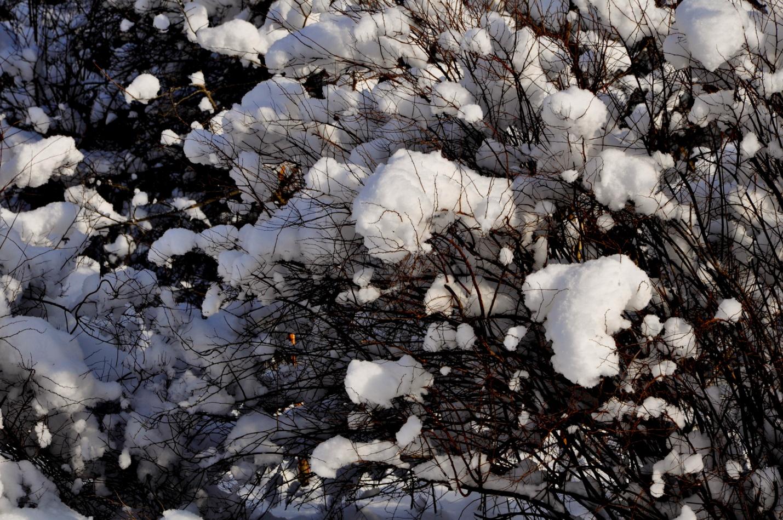 Кусты под пушистым снегом