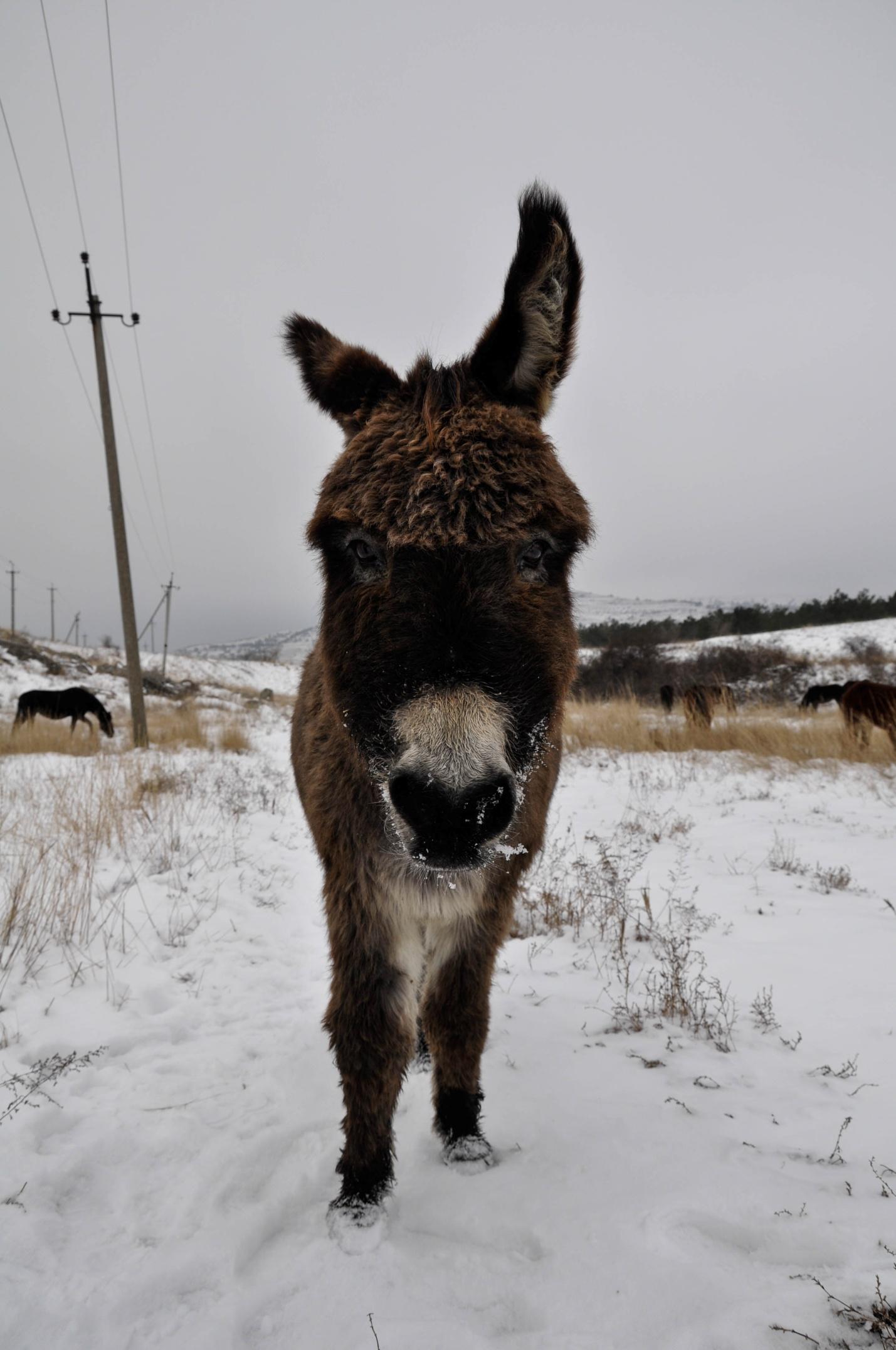 Милый ослик зимой в Крыму