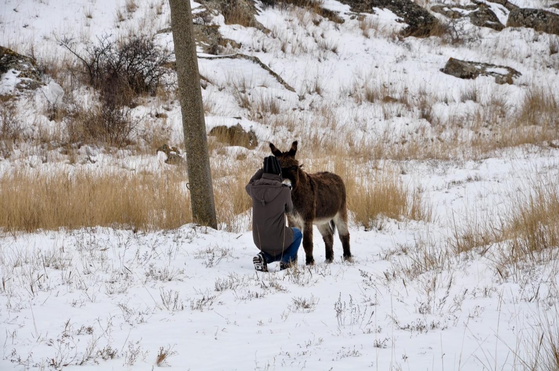 Ослик зимой в Крыму