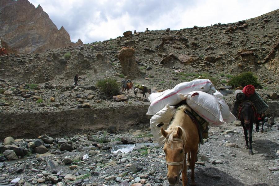 Лошади по тропе в Ладакхе, Гималаи