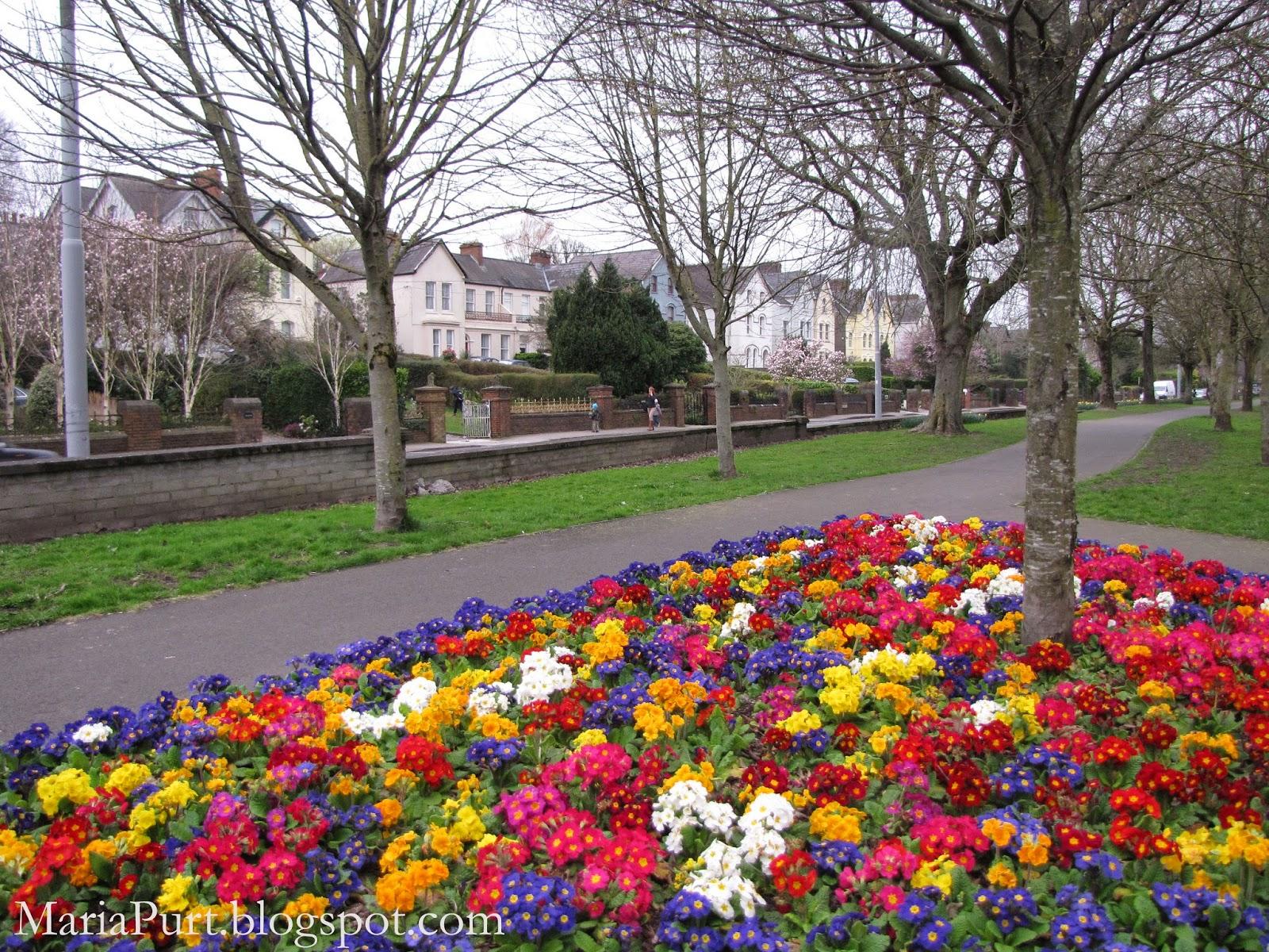 Цветущая клумба в Корке, Ирландия