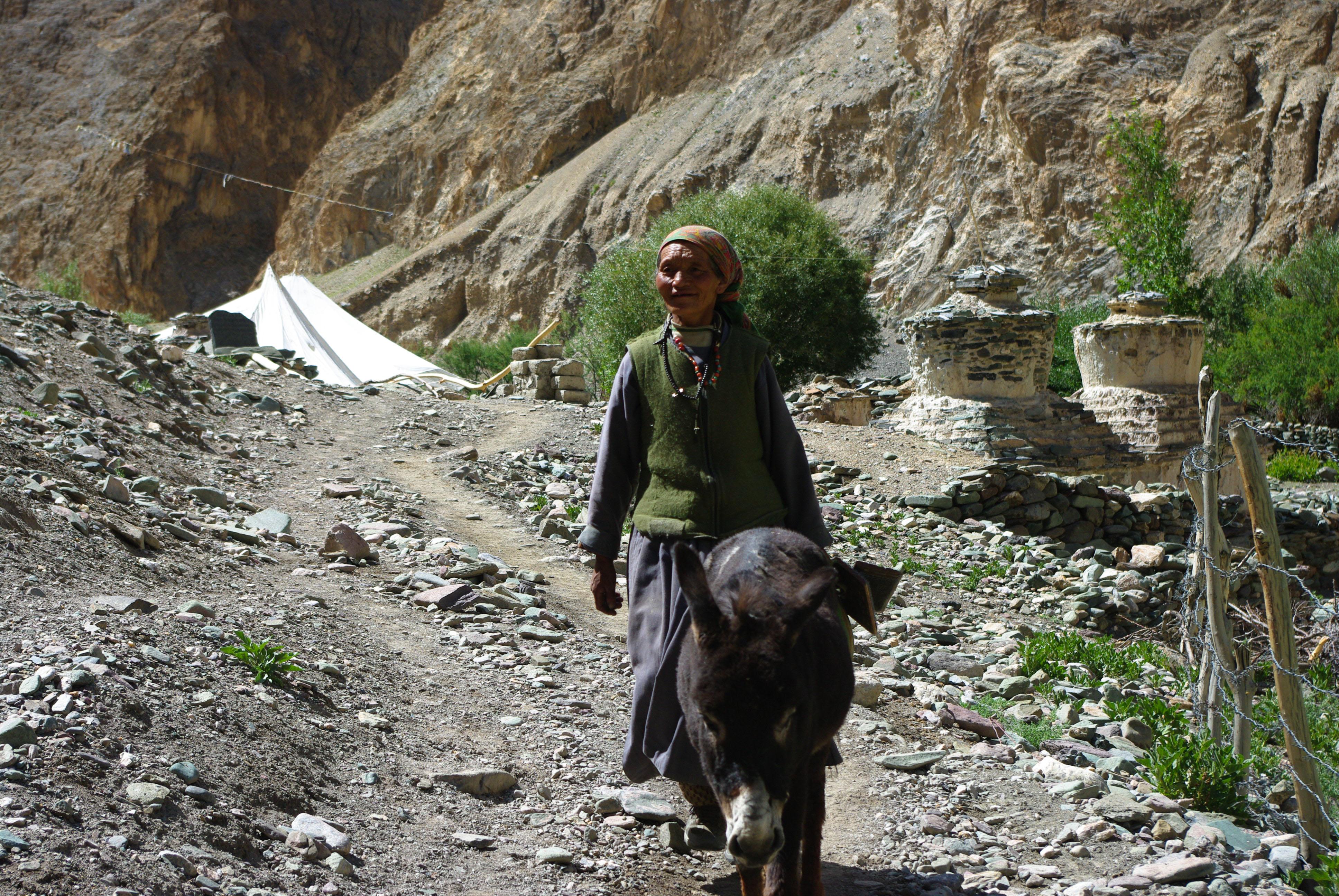 Местная жительница с осликом в Гималаях