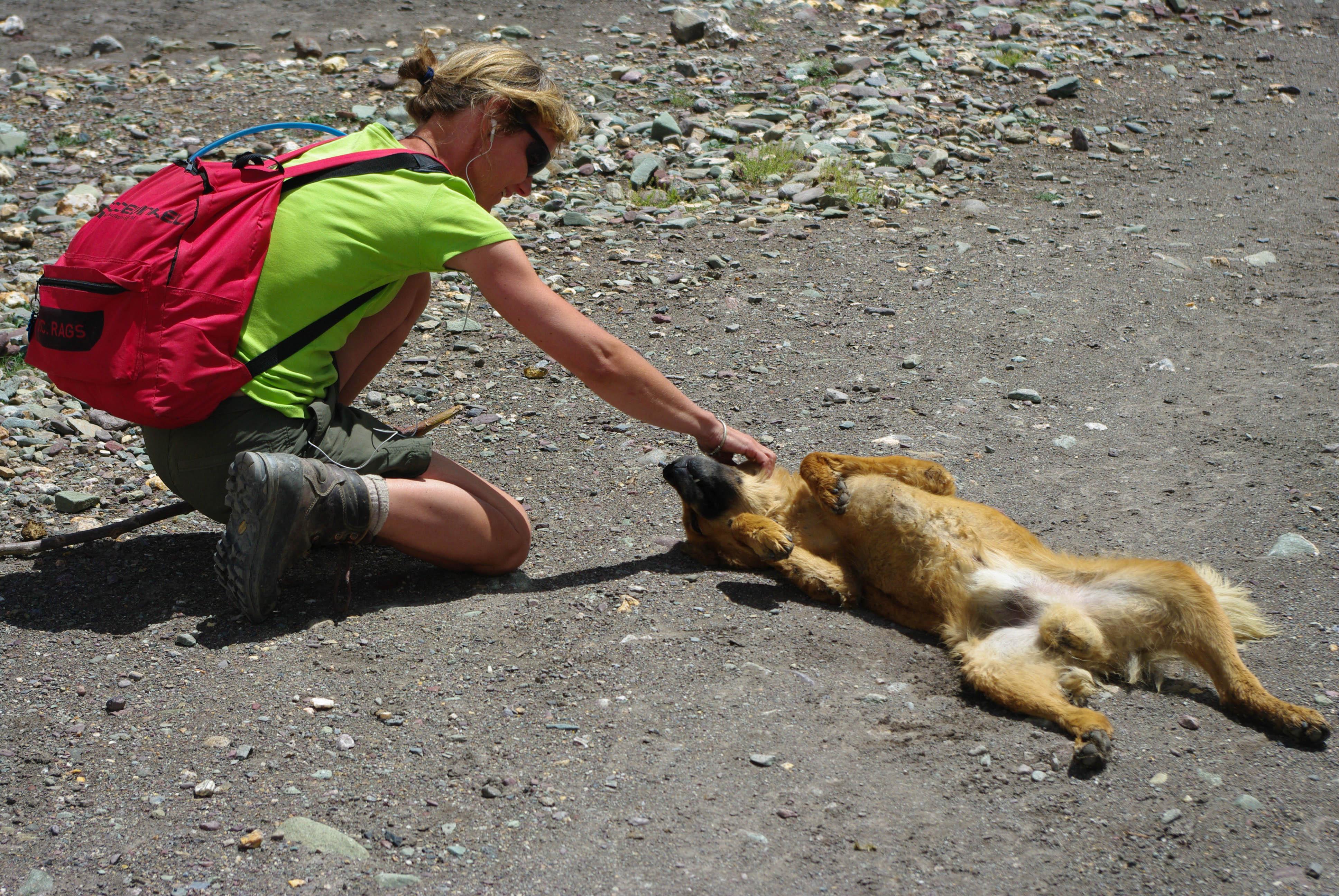 Турист и местная собака в Гималаях