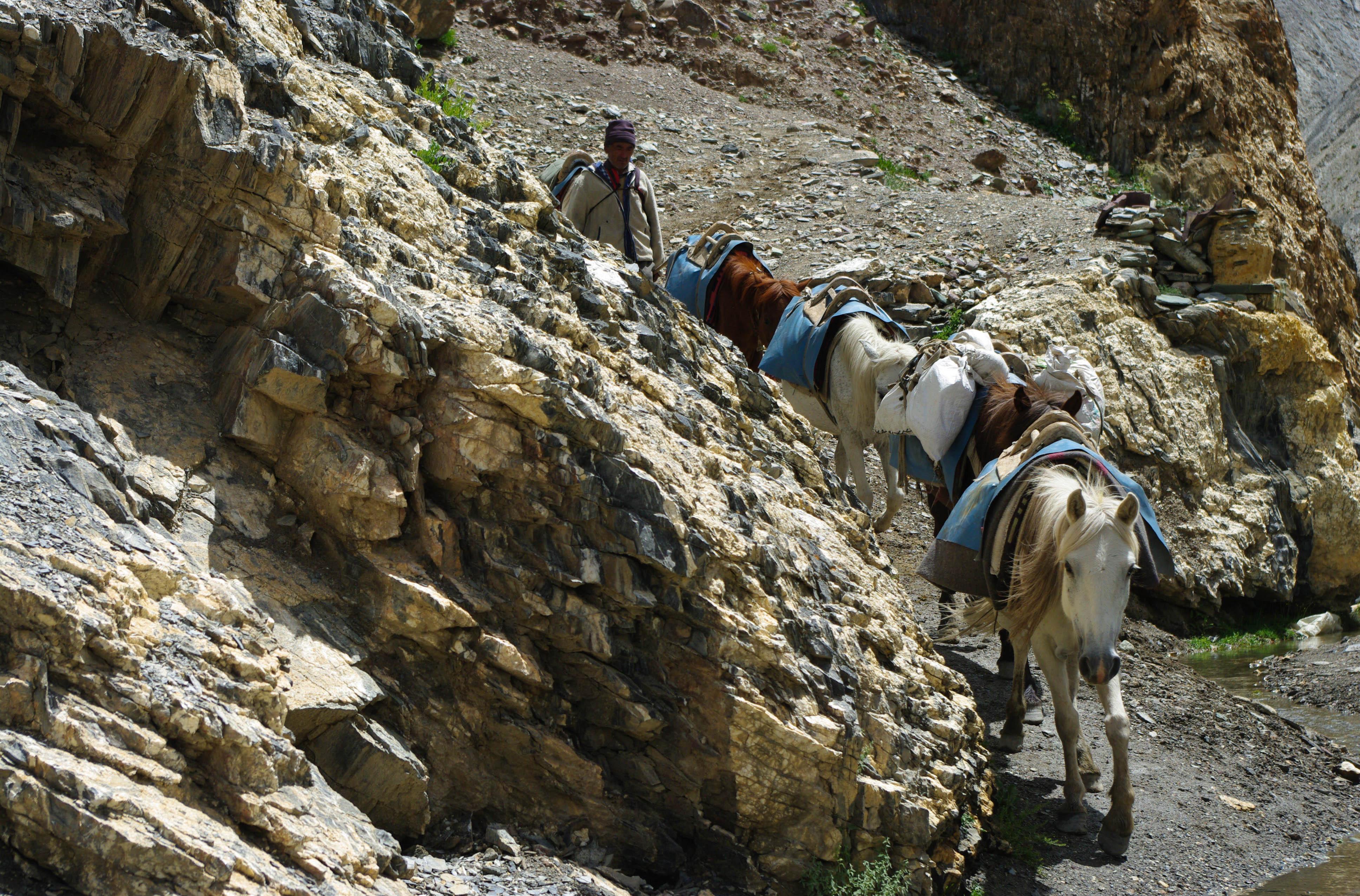 Лошадиный караван в Гималаях