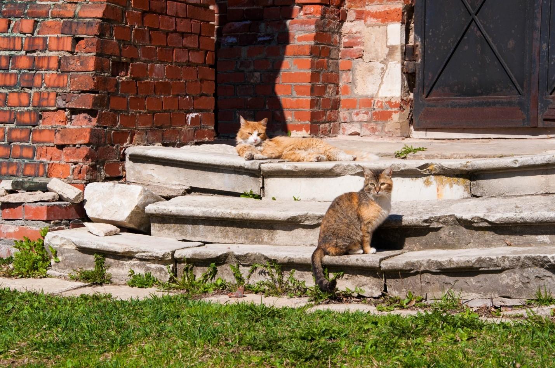 Коты на ступеньках, Волоколамск