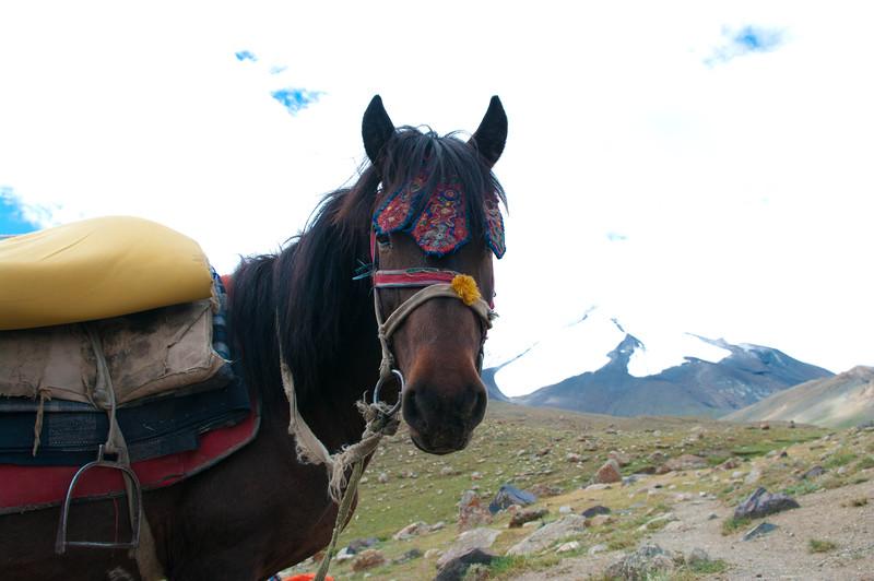 Лошадь в Гималаях