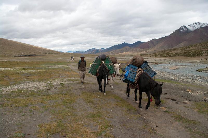 Караван из лошадей в горах Гималаи