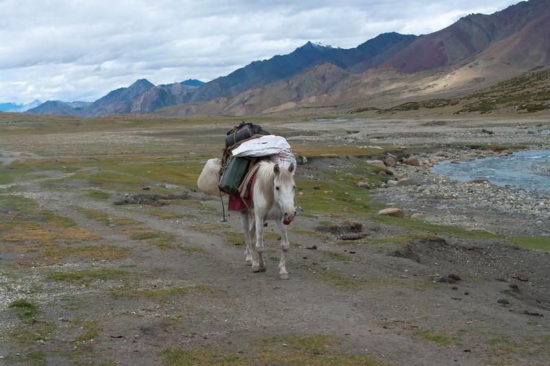 Лошадь в горах Гималаи