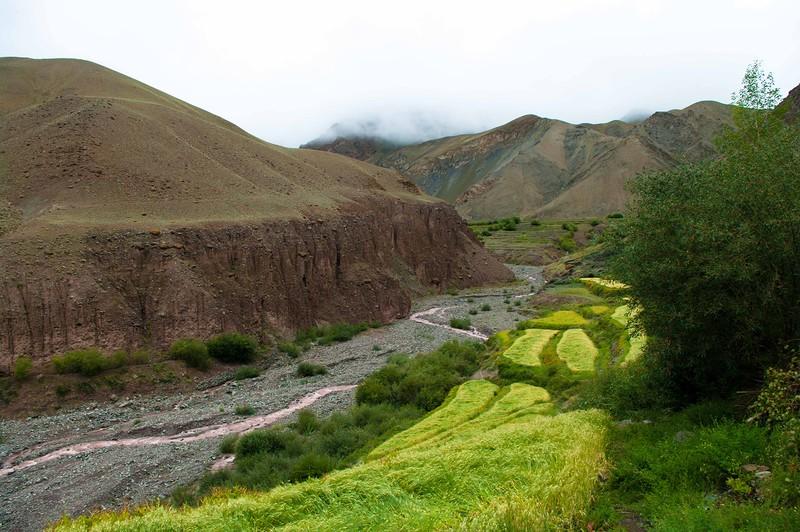 Зеленые поля пшеницы в горах Гималаи