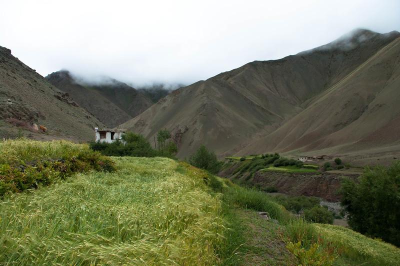 Зеленое поле пшеницы и дом в горах Гималаи