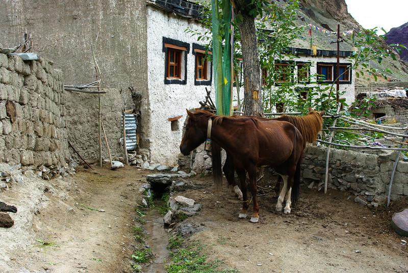 Лошади в селении в Гималаях