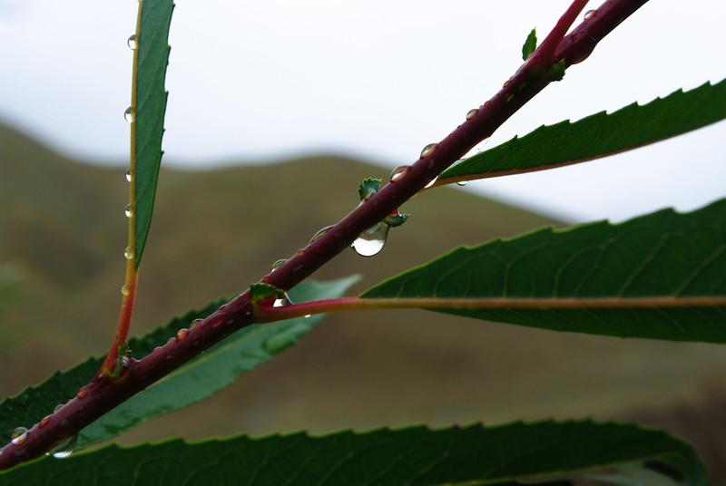 Капли дождя на веточке