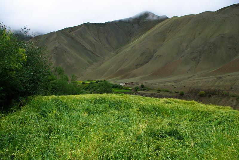 Зеленые поля в Гималаях