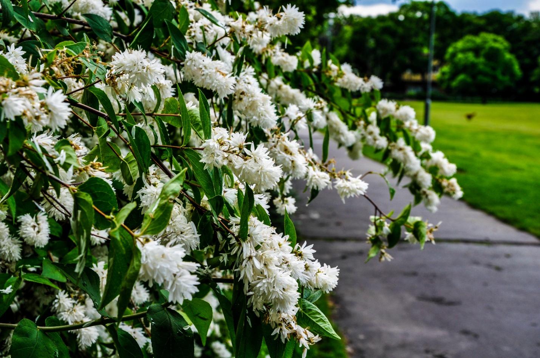 Цветущие деревья в парке Будапешта