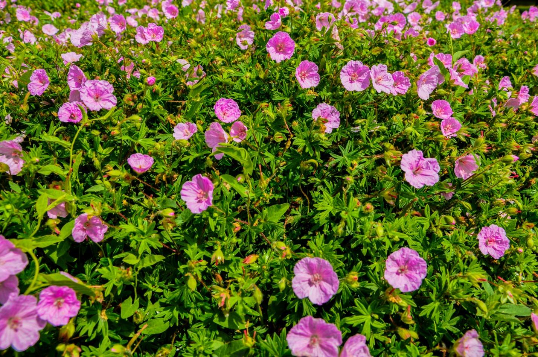 Цветы в парке в Будапеште