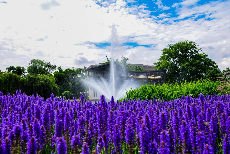 Цветы и фонтан в парке в Будапеште