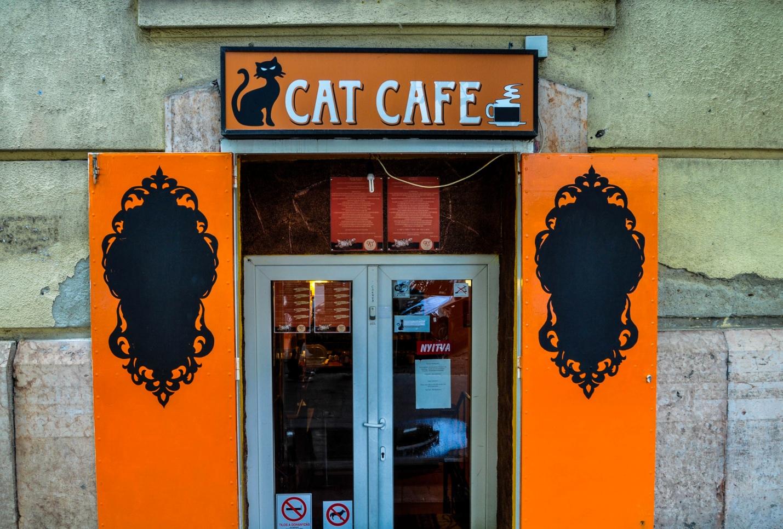 Вход в котокафе в Будапеште
