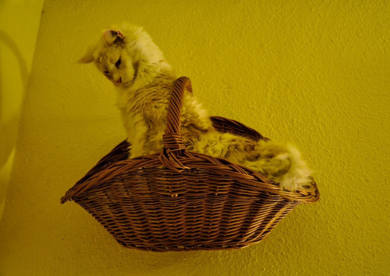 Кот в плетеной корзине