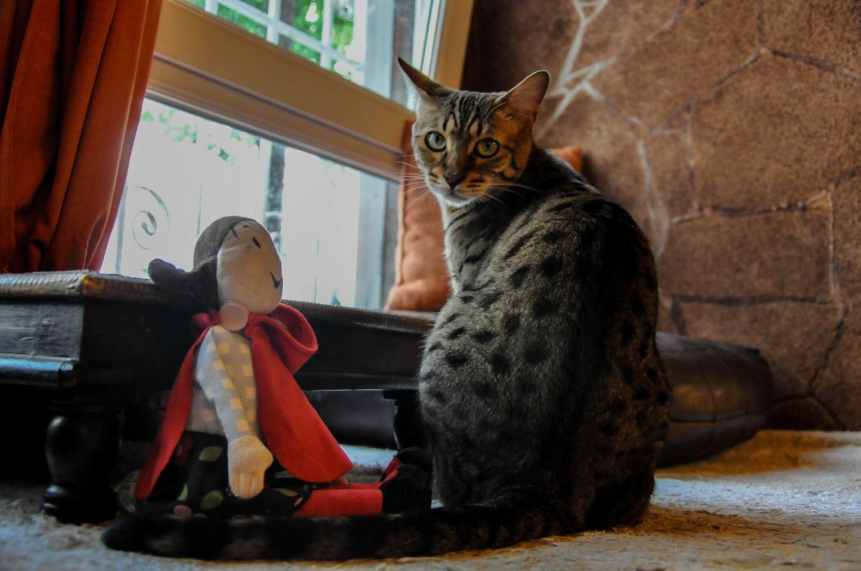 Кот в Котокафе в Будапеште