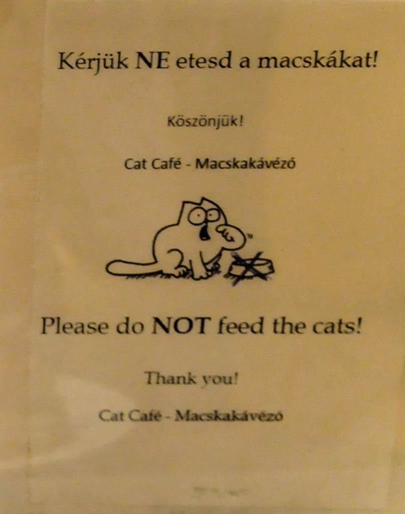 Котов кормить запрещено в котокафе
