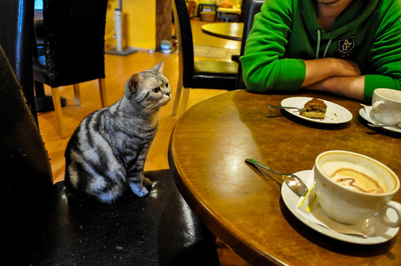 Котокафе в Будапеште