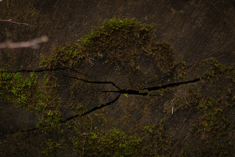 Старый срез дерева