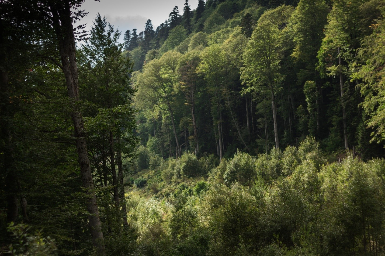 Горный лес в Водопадистом
