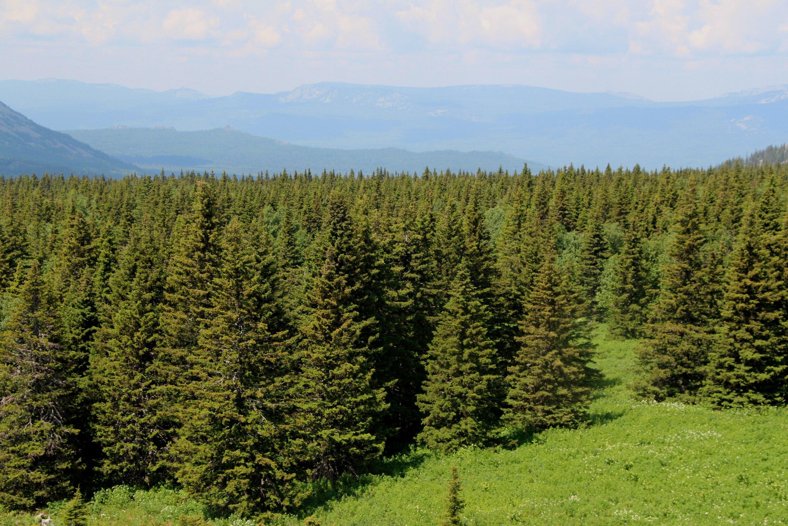 Лес на Урале