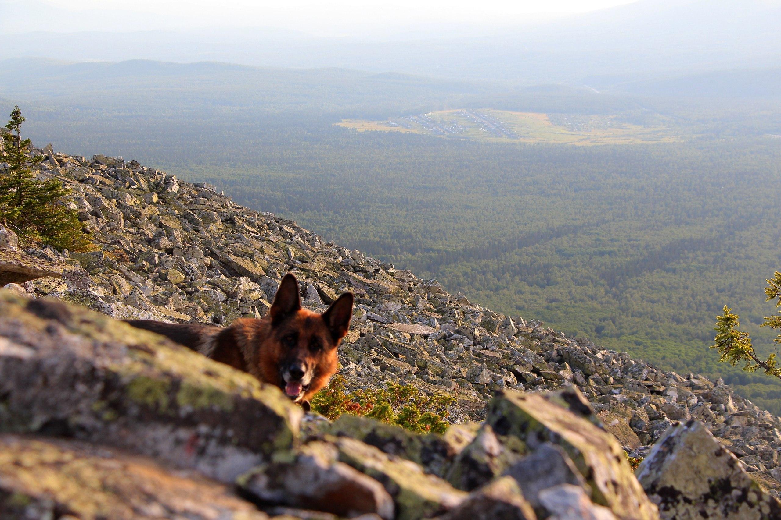 Собака в Уральских горах