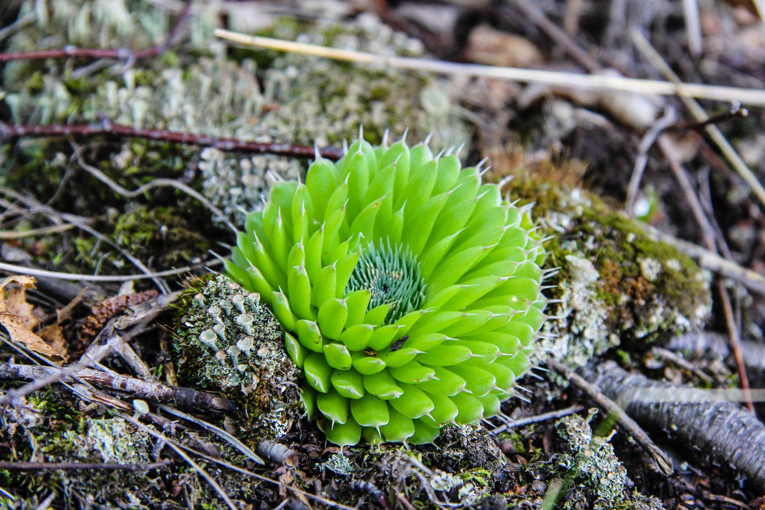 Необычное растение около Байкала