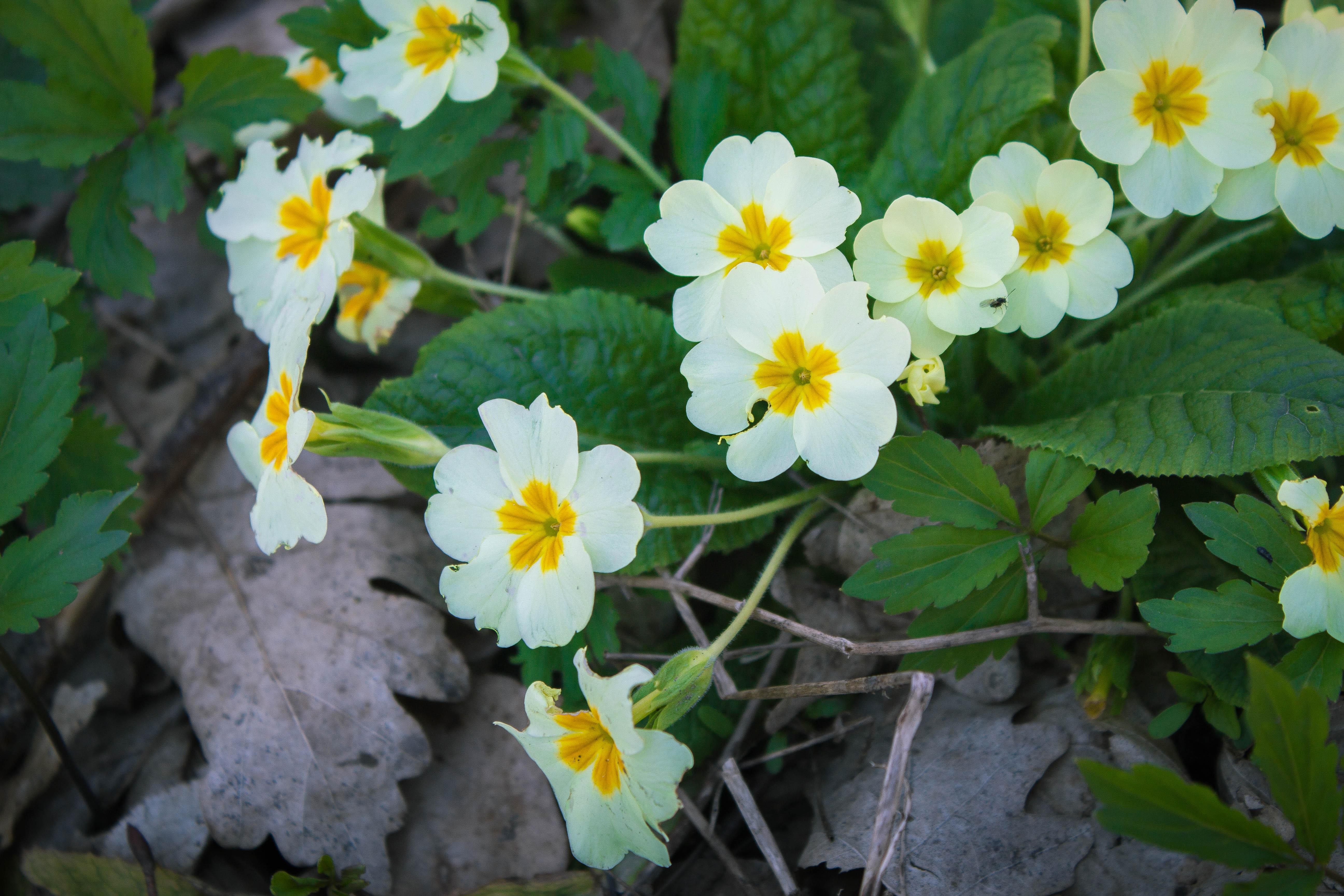 Весенние цветы в лесу за Горячим Ключем, Краснодарский край