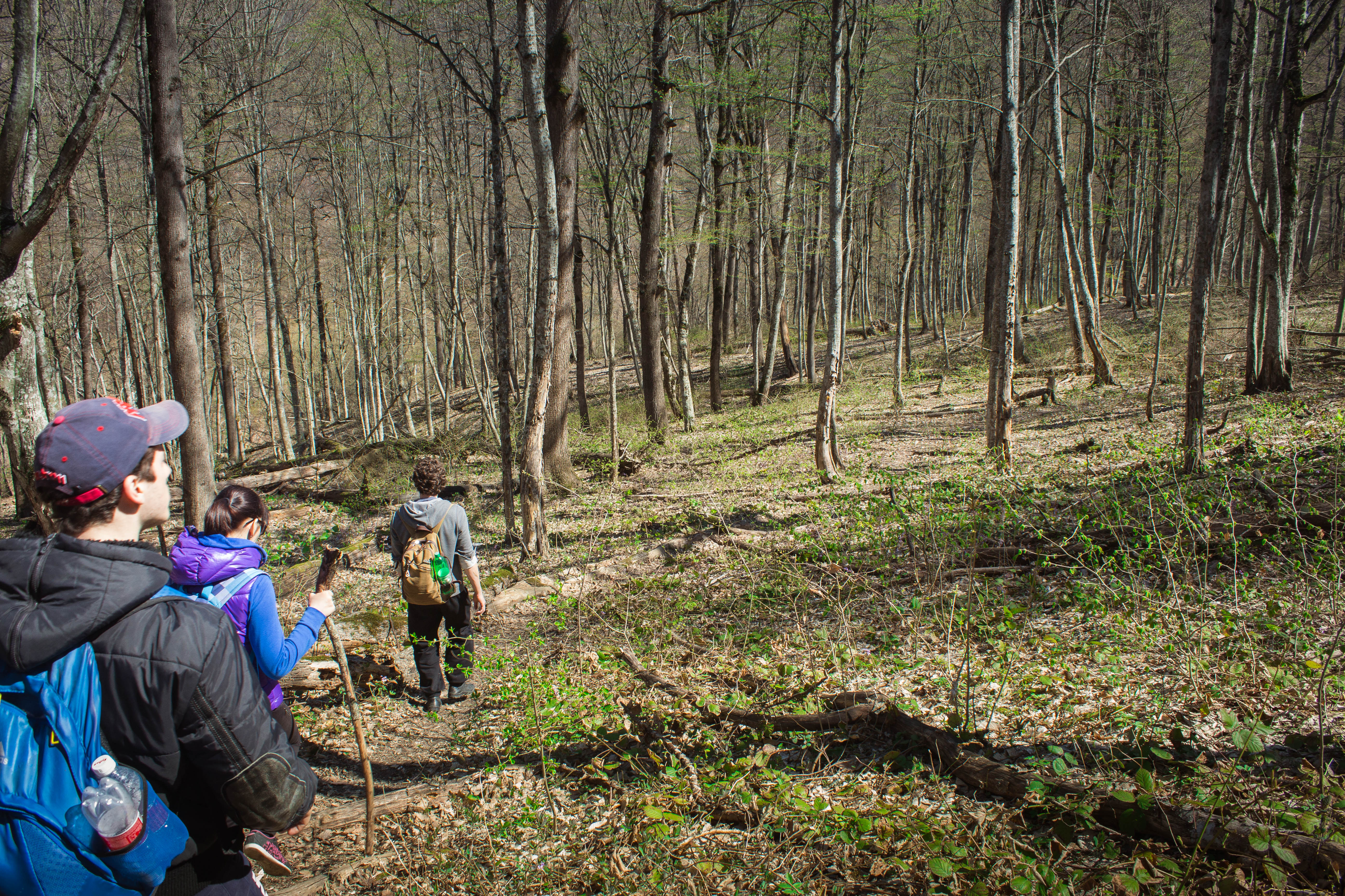 Тропа в лесу за Горячим Ключем, Краснодарский край