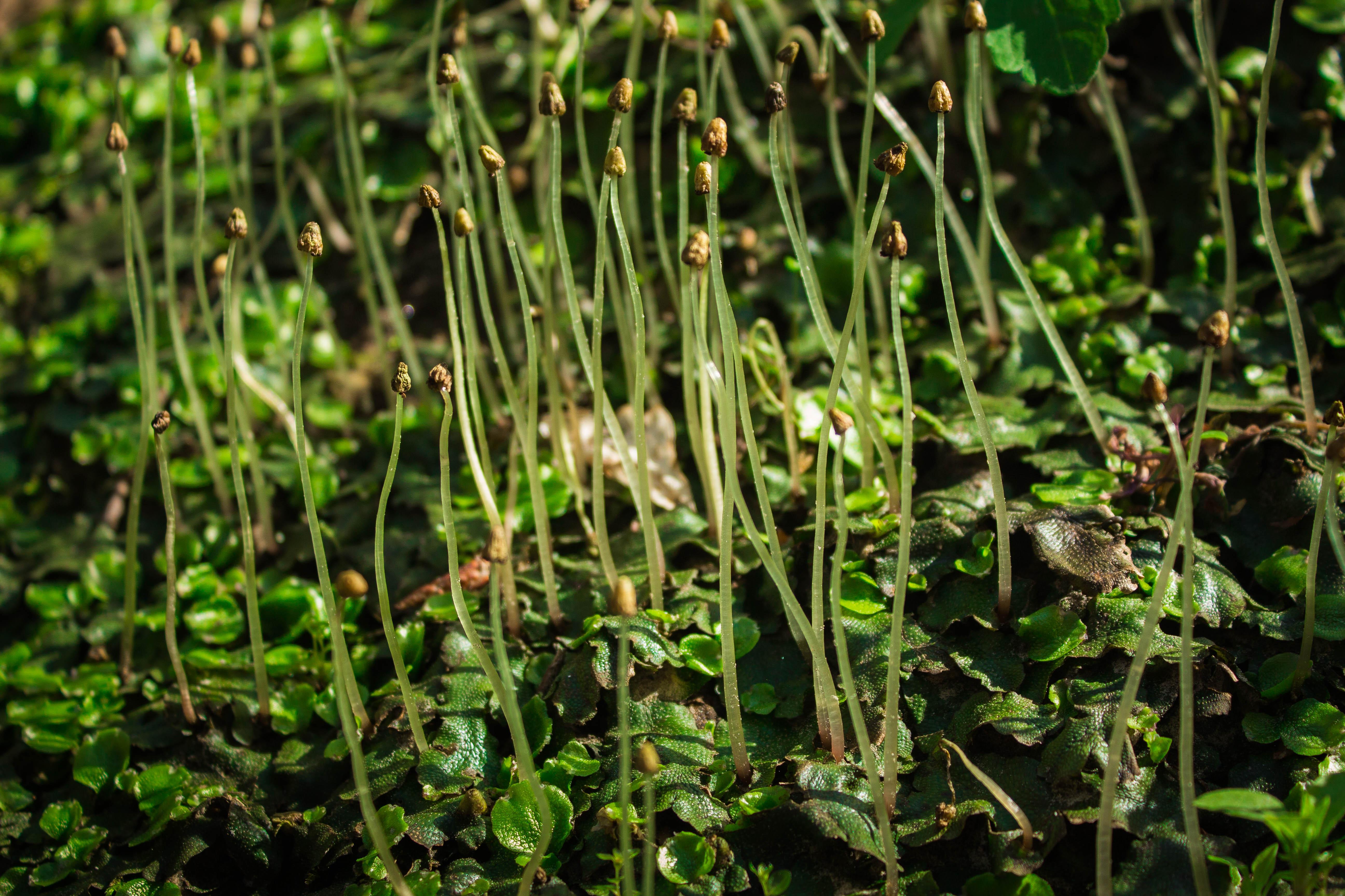 Первая зелень в весеннем лесу, Горячий Ключ, Краснодарский край