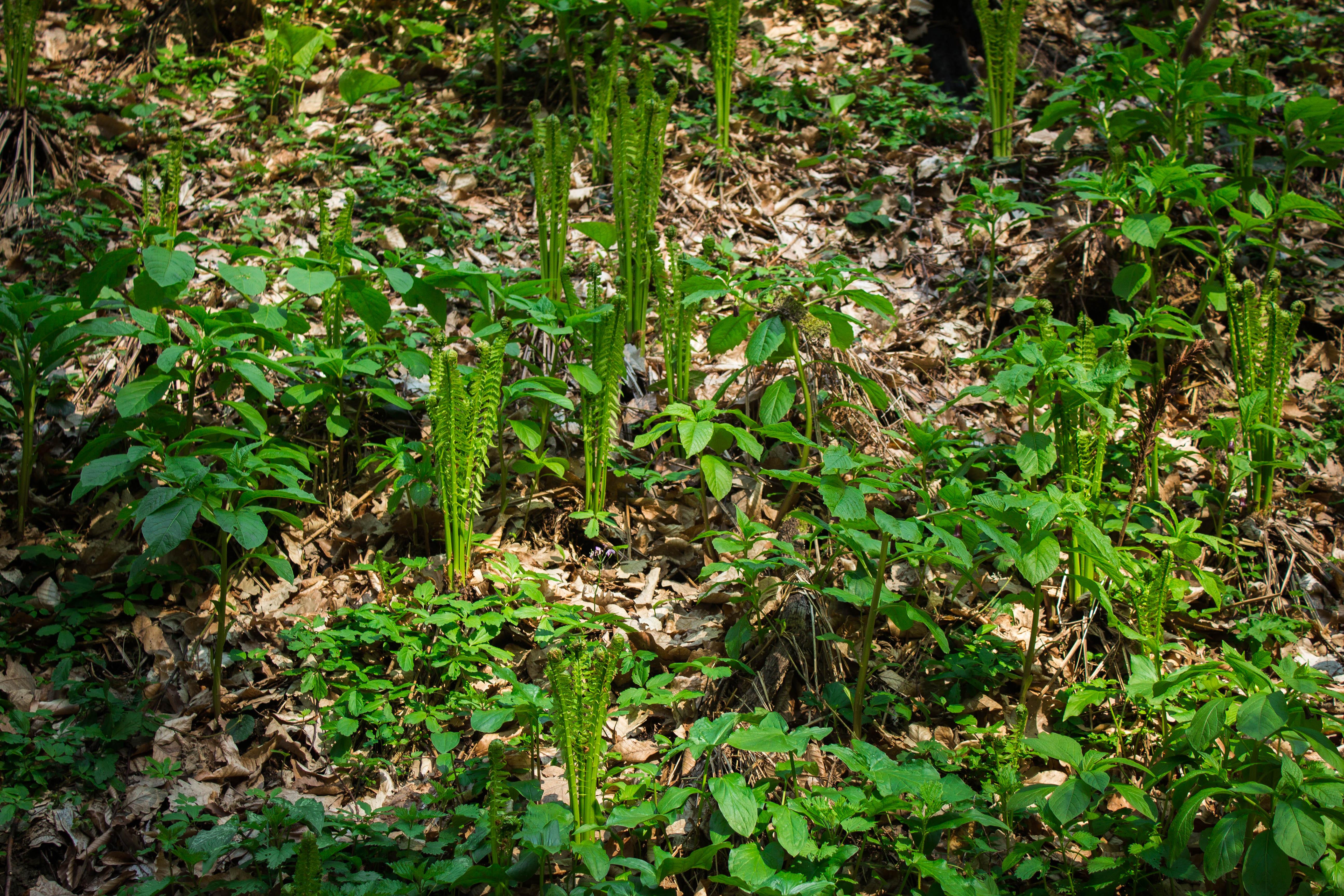 Первая весенняя зелень в лесу за Горячим Ключем, Краснодарский край