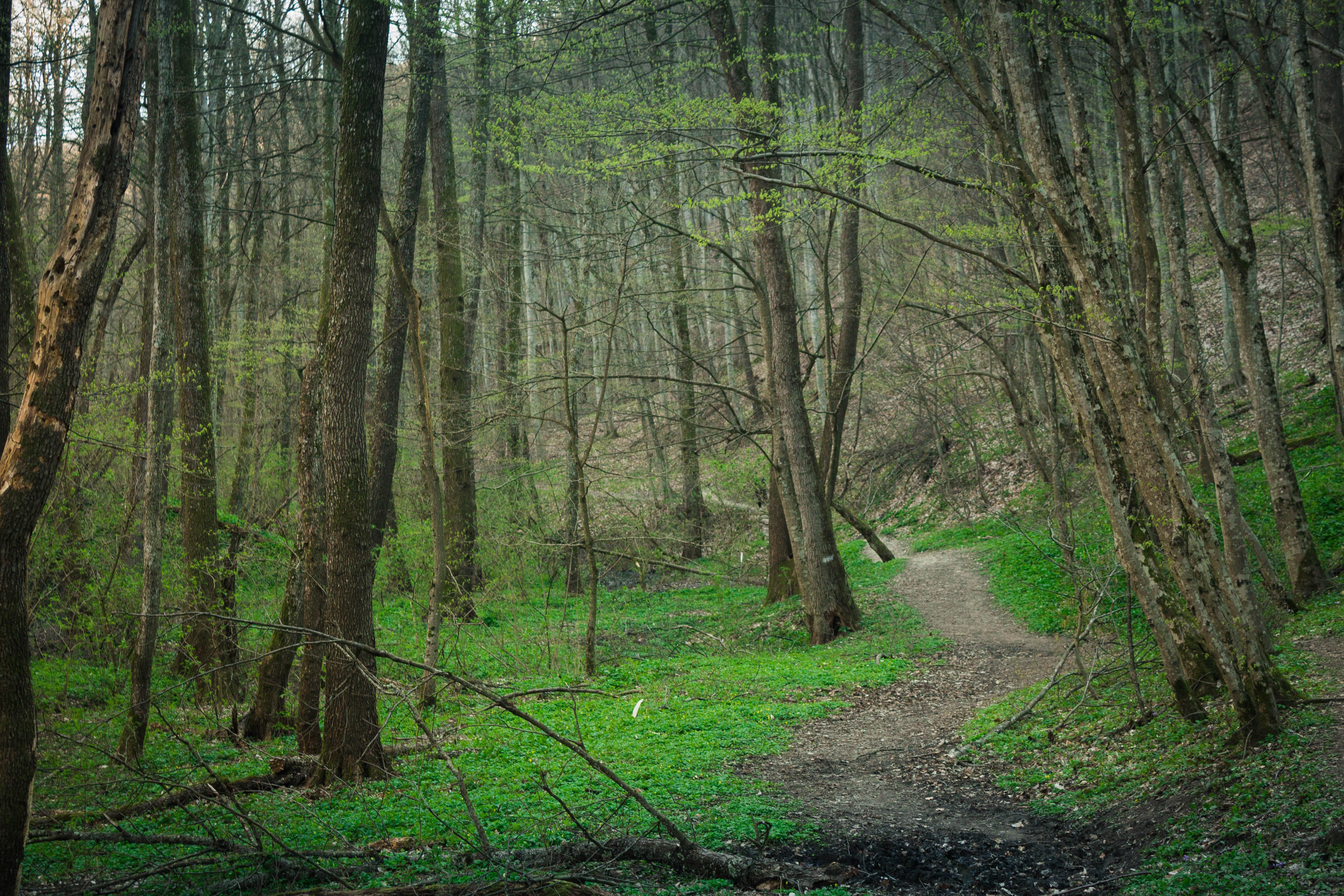 Весенний лес в Горячем Ключе, Краснодарский край
