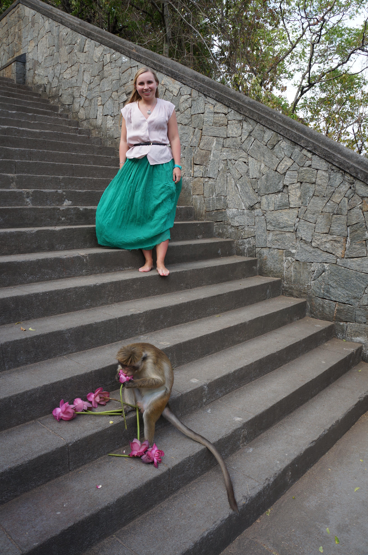 Обезьяны-воришки на острове Цейлон, Шри-Ланка