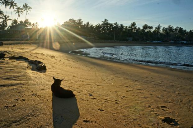 Собака на песчанном пляже встречает закат, Цейлон, Шри-Ланка