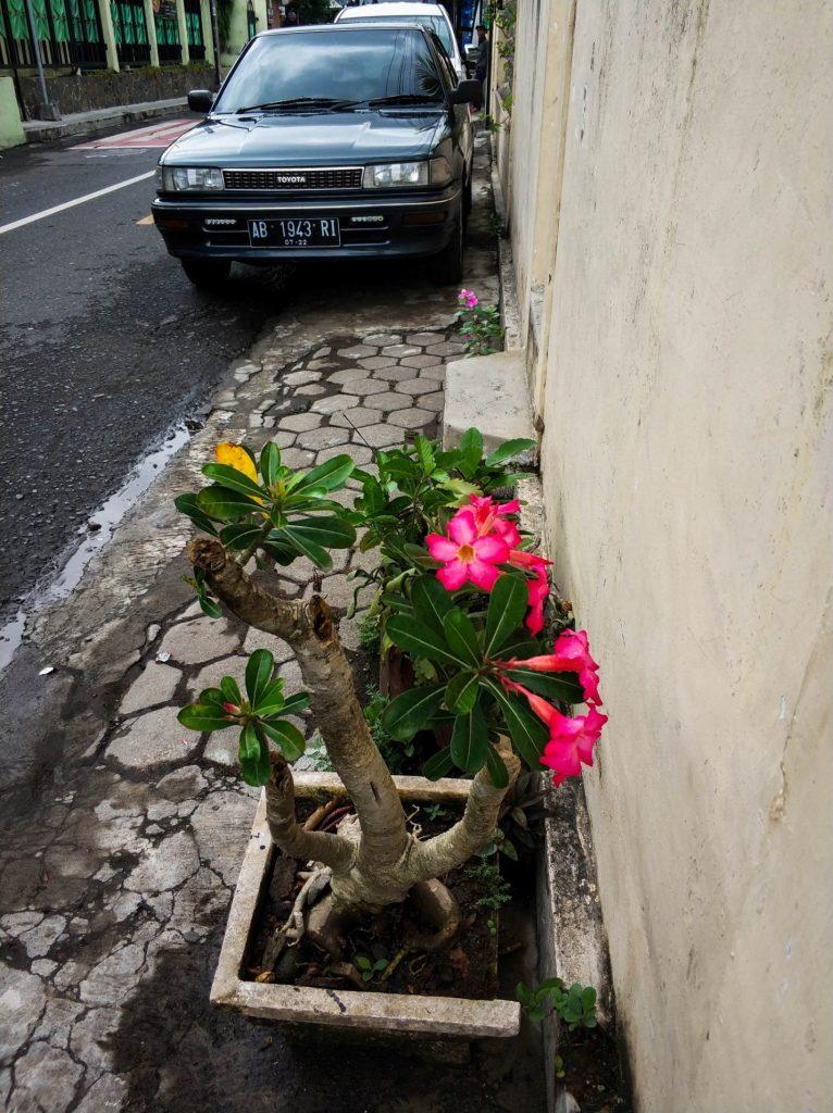 Уличные цветы в Джокьякарта, Ява