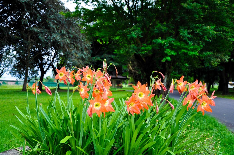 Цветы в парке на острове Ява