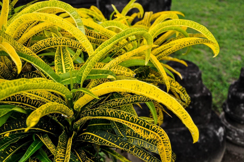 Растения в парке на острове Ява