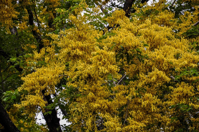 Пахучие деревья в парке на острове Ява