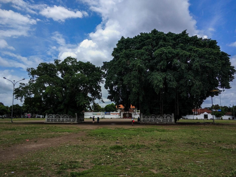 Два огромных баньяна на острове Ява