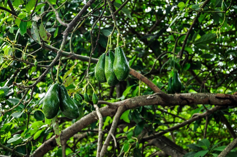 Растительность на острове Ява, Индонезия