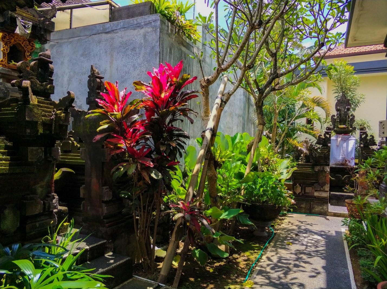 Двор на Бали, уличная растительность