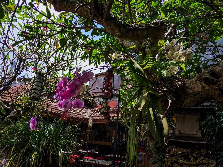 Уличные растения на Бали